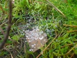kleine Wunder in der Natur versetzen uns immer wieder in Staunen