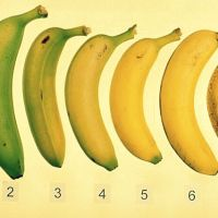 Isst du reife Bananen?