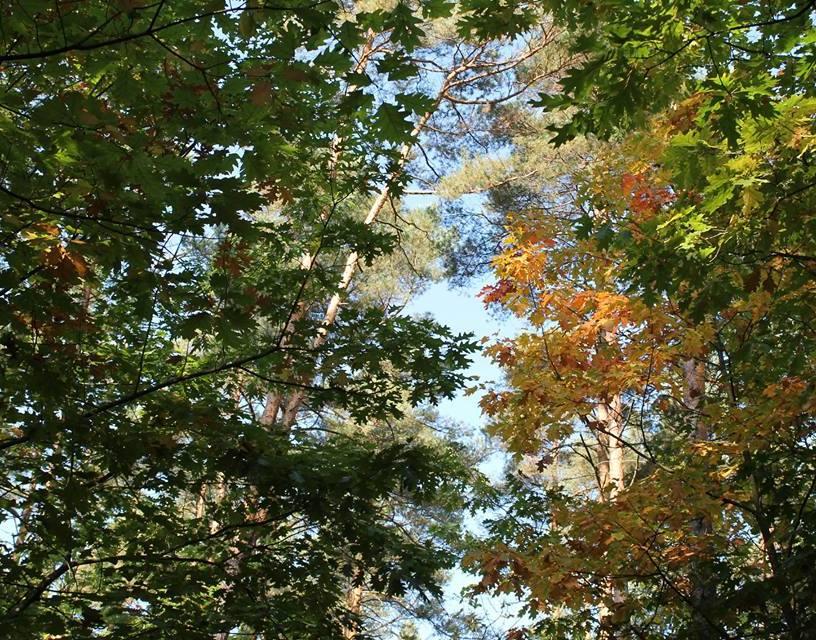 Wir lieben die Anfänge des Herbstes. Die bunten Farben lassen das Herz schneller schlagen