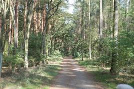 Die Weite des Waldes hat mich schon immer fasziniert. Man fühlt sich frei und umarmt