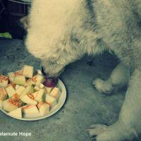 Melone für meinen Hund